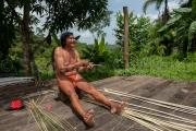 Arouman les branches d'arbustes pour la vannerie - Guyane