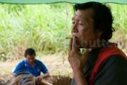 cigarette wayampi - Guyane