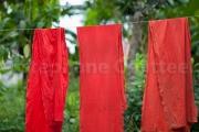 Kalimbe etendus - Guyane