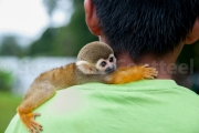 Enfant et singe ecureil ou Saimiri  - Guyane
