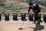 Ratissage du riz lors du sechage -Nagaland - Inde