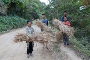 Paille pour decoration de Noel - Nagaland - Inde