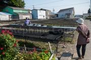 sechage des algues - Toshijima - Japon