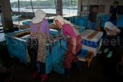 Ama au marche au poissons - Osatsu - Japon