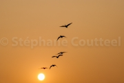 Vol de nuit - Keoladeo national park - Barathpur - Inde