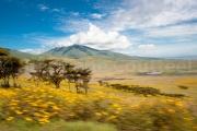 Impression de Savane - Tanzanie - Ngorongoro conservation area