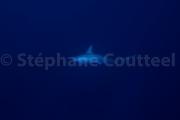 requins marteau - Okinawa