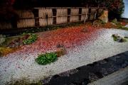 Nanzen ji apres la pluie - Japon