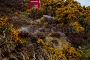 Telephone rouge - Phone box - Loch Eriboll - Ecosse