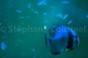 Aquarium Toba - Japon