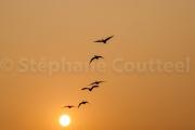 Vol de nuit - Keoladeo national park - Barathpur - Inde