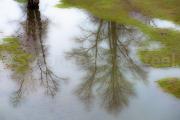 Impression d'arbres - Pont canal de Briare