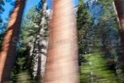 GT Cruising 1 Californie - Yosemite park