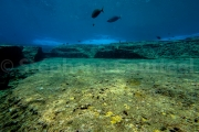 Les habitants du site archeologique  sous marin - Yonaguni - Okinawa